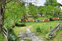 Beekeeping in rural yard during spring. Colorful beehives in a countryside yard in eastern Europe during springtime stock photo