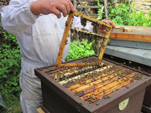 Beekeeping in the small czech farm Royalty Free Stock Images