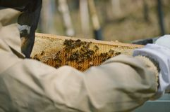A little beekeeping royalty free stock images