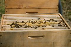 A little beekeeping royalty free stock photo