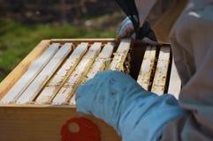 A little beekeeping stock photos