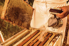 Beekeeping tool Stock Photos