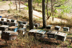 Beekeeping at Vietnam, beehive, bee honey. Beekeeping at Vietnam, Vietnamese agriculture, group of bee tank, group of beehive in Dalat jungle, honey is nutrition stock image
