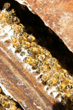 Beekeeping at Vietnam, beehive, bee honey. Beekeeping at Vietnam, Vietnamese agriculture, group of bee tank, group of beehive in Dalat jungle, honey is nutrition royalty free stock photo
