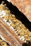 Beekeeping at Vietnam, beehive, bee honey Royalty Free Stock Photo