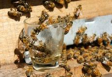 Beekeeping at Vietnam, beehive, bee honey Stock Image