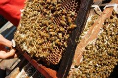 Beekeeping at Vietnam, beehive, bee honey Royalty Free Stock Image