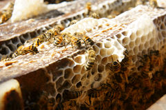 Beekeeping at Vietnam, beehive, bee honey. Beekeeping at Vietnam, Vietnamese agriculture, group of bee tank, group of beehive in Dalat jungle, honey is nutrition stock photo