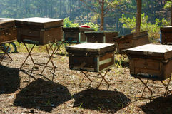 Beekeeping at Vietnam, beehive, bee honey Royalty Free Stock Photography