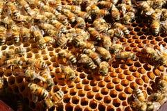 Beekeeping at Vietnam, beehive, bee honey Stock Photo