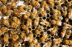 Beekeeping at Vietnam, beehive, bee honey Royalty Free Stock Photos