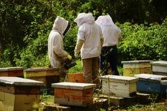 Beekeeping w Ekwador obrazy royalty free