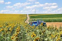 Beekeeping w słonecznika polu zdjęcia royalty free