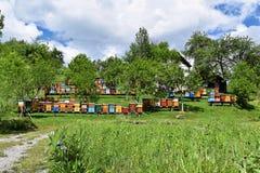 Beekeeping w wiejskim jardzie podczas wiosny obraz royalty free
