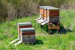 Beekeeping with wooden beeyards. Beekeeping - bees flying to a wooden beeyard royalty free stock image
