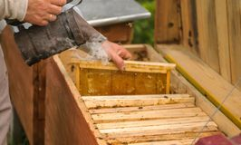 Beekeeping, work with bees.  royalty free stock photos