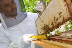 Beekeeping in the yard. Sealed stock image