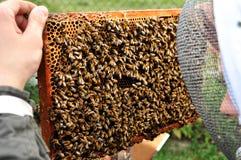 Beekeper de trabalho Foto de Stock Royalty Free