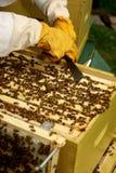 Beekeper die neigt te huisvesten Royalty-vrije Stock Afbeelding