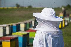 Beekeper in protection suit. Horizontal rear view of one beekeepers in protection suit looking over beehives with bees swarming around Royalty Free Stock Images