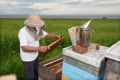 Beekeper at work by the sea Royalty Free Stock Photo