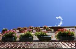 Beeld bloeiende bloemen op de vensterbank thuis Royalty-vrije Stock Afbeelding