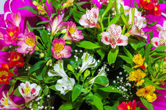 Beeld Bloemenachtergrond van installaties Alstroemeria Stock Afbeelding