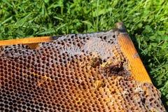 Beeld in close-up van een honingraat op een gras royalty-vrije stock foto