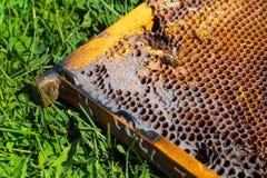 Beeld in close-up van een honingraat op een gras royalty-vrije stock afbeelding