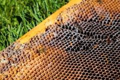 Beeld in close-up van een honingraat op een gras Stock Foto's