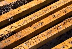 Beeld in close-up van een oude geopende bijenkorf van hierboven Stock Foto