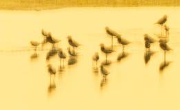 Beeld gouden licht van vogelkust Royalty-vrije Stock Afbeelding