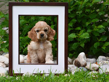 Beeld perfect puppy Royalty-vrije Stock Foto's