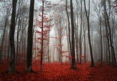 Mooi bos tijdens de herfst Royalty-vrije Stock Afbeeldingen