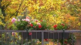 Beeld van begonia's in de regen De herfst Droevige stemming