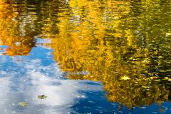 Beeld van Bezinning van de herfst gele bomen in vijver in een park Stock Foto's