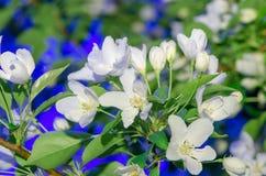Beeld van bloeiende tak tegen de blauwe hemel royalty-vrije stock foto