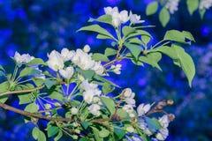 Beeld van bloeiende tak tegen de blauwe hemel stock fotografie
