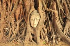 Beeld van Boedha van Ayutthaya Royalty-vrije Stock Afbeelding