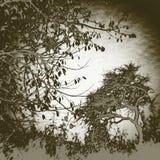Beeld van bomen onder de herfsthemel stock foto's
