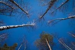 Beeld van bomen zonder bladeren met kristal blauwe hemel zonder wolken royalty-vrije stock fotografie
