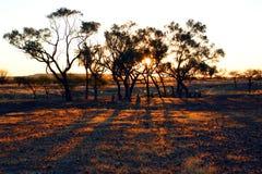 Beeld van bomen in zonsondergang Royalty-vrije Stock Afbeeldingen