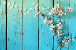 Beeld van de bloesemsboom van de de lente witte kers op blauwe houten lijst wijnoogst gefiltreerd beeld Royalty-vrije Stock Foto's