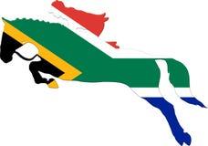 Beeld van dressuur het RuiterdieSporten door Zuidafrikaanse Vlag wordt bedekt stock fotografie