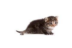 Beeld van droevig die gestreepte katkatje, op wit wordt geïsoleerd Royalty-vrije Stock Foto's