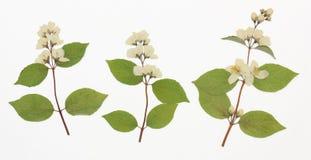 Beeld van droge bloemen in verscheidene varianten stock foto's