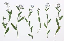 Beeld van droge bloemen in verscheidene varianten Royalty-vrije Stock Fotografie