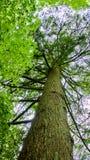 Beeld van een boomboomstam Stock Foto