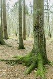 beeld van een boomstam van een boom met zijn groene boomstam stock fotografie