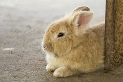 Beeld van een bruin konijn royalty-vrije stock foto's